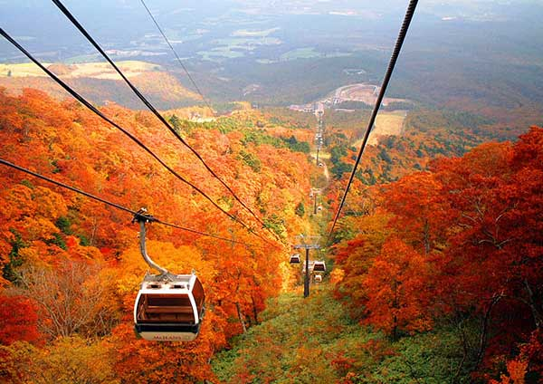 Red Leaves Gondola